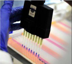 Wall Street Journal: oamenii de știință încearcă să afle mecanismul de trasmitere a genelor de la o specie la alta