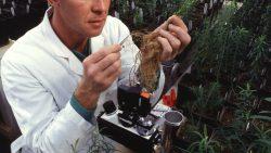 SOT consideră culturile mg la fel de sigure ca plantele clasice